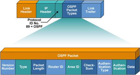 gói tin OSPF